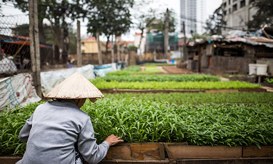May '17 - Inner city farming in Hanoi
